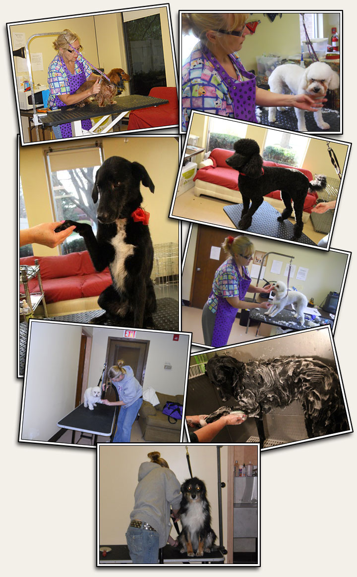 Dog Grooming - Lucky Dog Lisle Dog Daycare