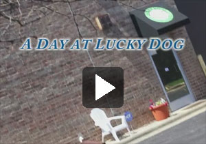 LDTV - Lucky Dog TV